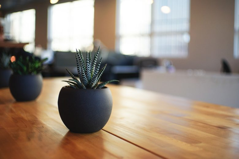 Best Plants for Each Room in Your House