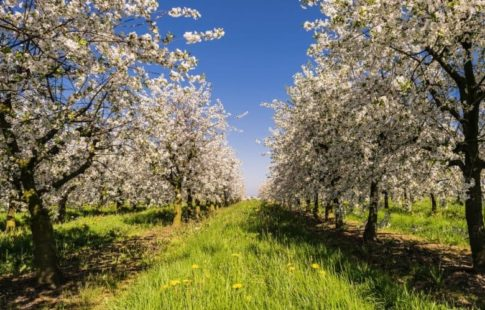 Technology Assisting Agroforestry