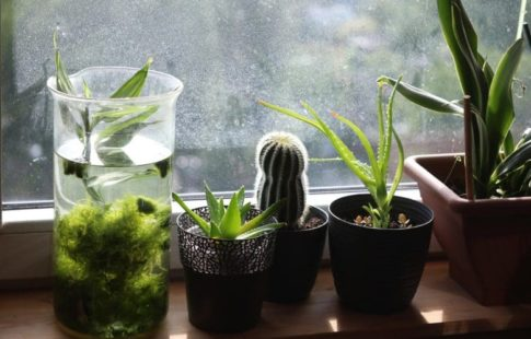 beginner plants to grow indoors