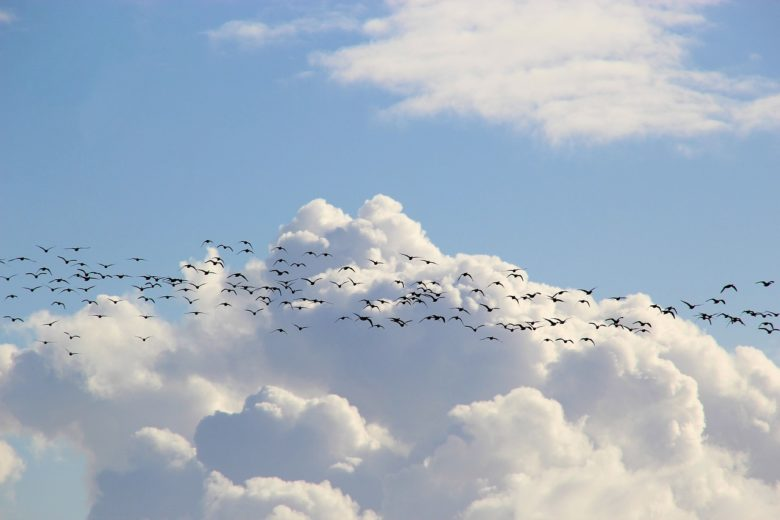 climate change affect bird migration
