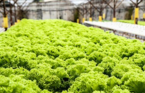 are hydroponics healthy