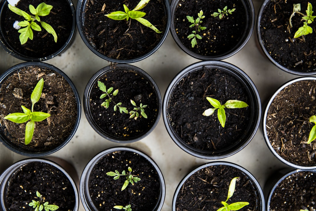 7-simle-ways-to-live-sustainably-every-day