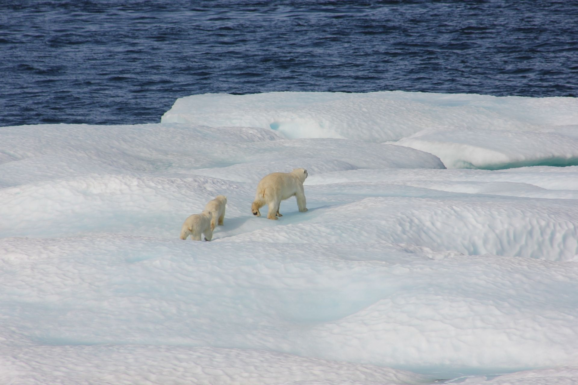 how-does- climate-change-affect-plants-and-animals