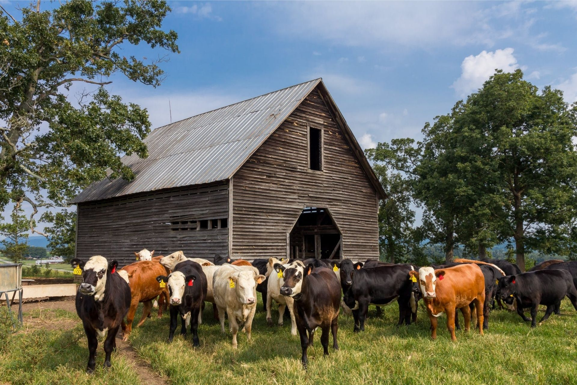 How-Do-Climate-Change-and-Livestock-Affect- Each-Other