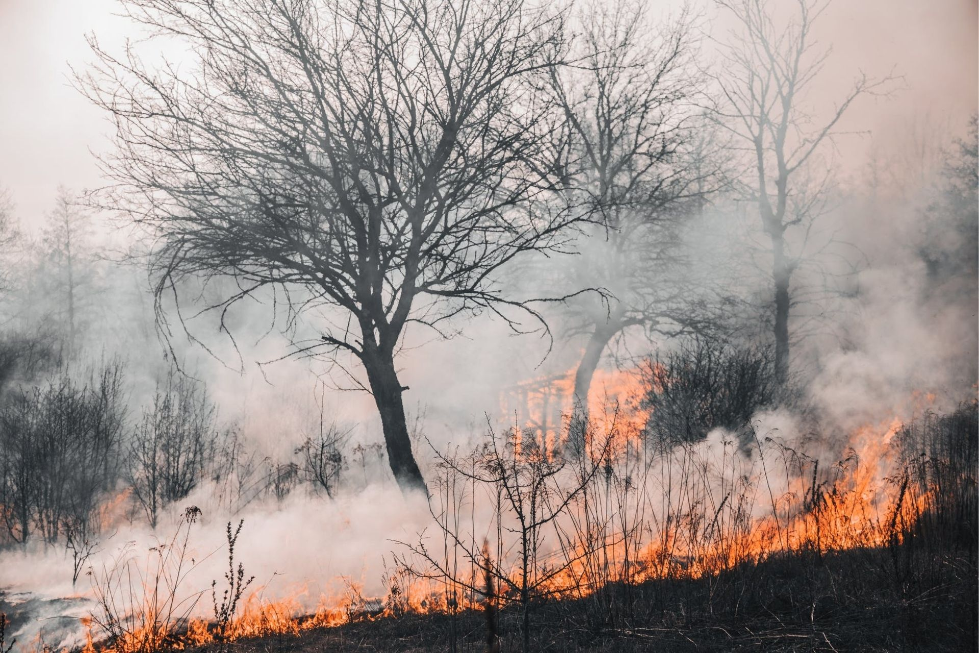 how do forest firest affect climate change